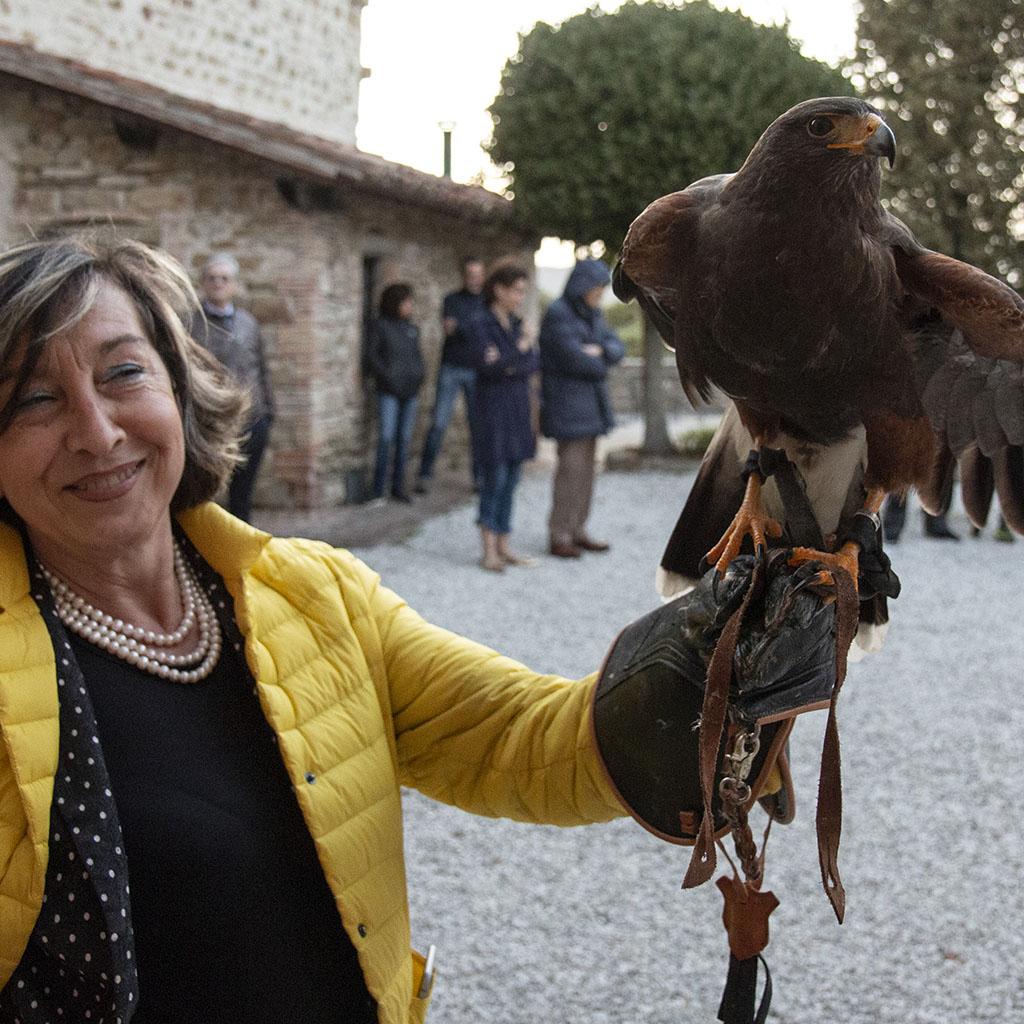 Un falco al Castello di Petroia