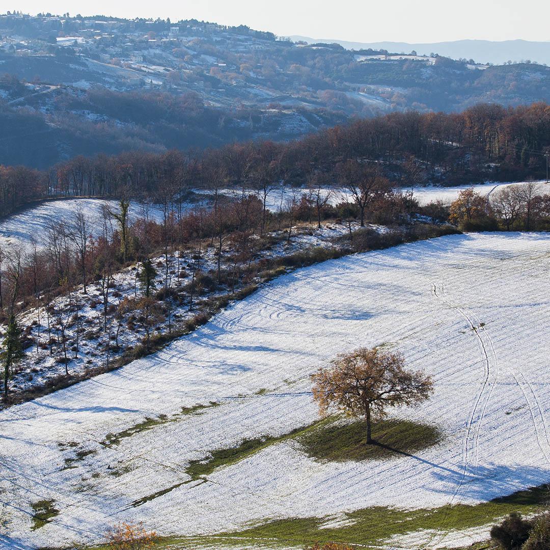 Petroia_in_inverno